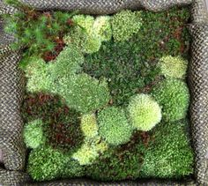 Moss art - Once the moss clings to the fabric (attached to shallow box & frame) I'll trim the fabric and hang on the wall. Moss Wall Art, Moss Art, Bigger Person, Moss Garden, Living Room Art, Ikebana, Shade Garden, Ponds, Box Frames