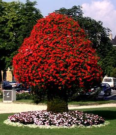 Google Image Result for http://www.opac.ch/people/arnaud/pics/photo.flower-tree.jpg