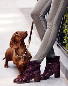 boots and doxie