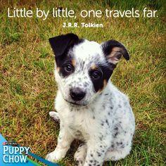 """""""Little by little, one travels far."""" J.R.R Tolkien"""