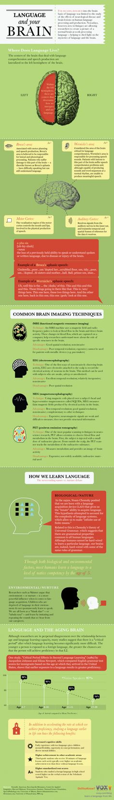 How we learn language...  For centuries, researchers have studied the brain to find exactly where mechanisms for producing and interpreting language reside. Theories abound on how humans acquire new languages and how our developing brains learn to process languages. We take a look at the mysteries of language and the brain in the infographic below.