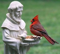 HUGE cardinal with St.Francis.  Love my St. Francis statue.