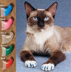 Soft Claw Nail Caps for Cats $19.99  http://www.drsfostersmith.com/product/prod_display.cfm?c=3261+20827+19945&pcatid=19945  Prevent damage from scratching! New and improved Soft Claws CLS are an ideal solution when cat scratching is a problem in your home. They're also a preferred alternative to declawing. ...//.. Combined with the cleats, the cuff helps to improve over-all adhesion. Plus, a Kitten size is now available ..//...