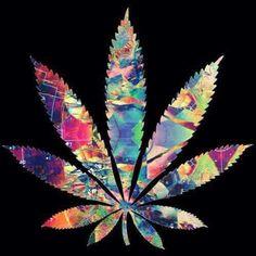 Hippies kush