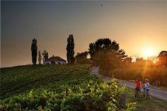 Von Familienradtouren über Touren für Genussradler bis hin zu Abschnitten für ambitionierte Radfahrer wird in der Region Bad Radkersburg alles angeboten! #Badradkersburg #Radregion #Urlaub #Natur #Weinregion  (c) TVB, Bernhard Bergmann