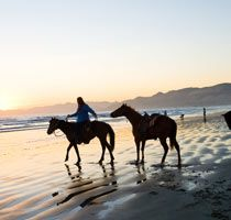 I love riding horses, especially on the beach (did this a couple times).  Always dreamed of having a horse.