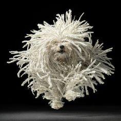 FLUFFY PUPPY! Tim Flach - dog photographs