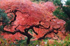 jardin asiatique dans un esprit japonais - plantes vertes et arbres exotiques