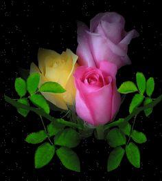Para que enviar flores en movimiento gratis (4)