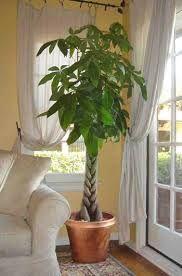 piante e fiori da appartamento - Cerca con Google