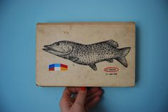 fish on book