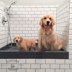 """But what were we to do?! I wasn't about to keep Lucy indoors all day! What kind of life is that?!"" See her 'dog shower' idea:"