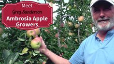 Meet Your BC Ambrosia Apple Growers  - Greg Sanderson