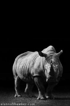 Rhino by *Alannah-Hawker on deviantART