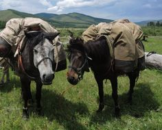 Pack horses on a break, with Stone #Horse #Expeditions in #Mongolia's Gorkhi Terelj National Park. www.stonehorsemongolia.com