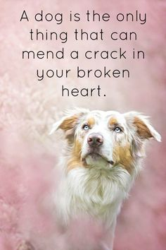 A dog is the only thing that can mend a crack in your broken heart.