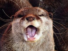 """YAAAS I caught the train RIGHT as the doors were closing today!!"" 