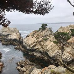 #carmelbythesea #california 6.29.17 #carmellocals #montereybaylocals - posted by Rita Ryan https://www.instagram.com/ritaryanlocalmotion - See more of Carmel By The Sea, CA at http://carmellocals.com