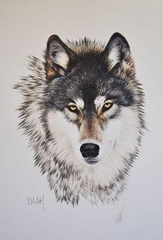 lobo 1