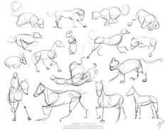 Gesture Drawing - Animals « Kimberly Joyce Illustration