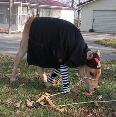 Good thing I don't have a ranch or all my babies would have clothes lol lol. Baby Cows, Fall Wardrobe, Farm Animals, Ranch, Lol, Babies, Pets, Clothes, Guest Ranch
