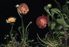 How-To: Dark Botanicals on The Bulletin. #DIY #scannedflowers
