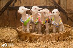 Meet the New Lambs of Edgar's Mission, the Cutest Rag-Tag Team You've Ever Seen
