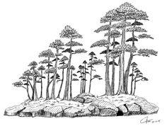 Bonsai bosque