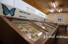 Na cidade de Seara, de 16,9 mil habitantes, está o maior museu de insetos da América Latina, graças ao trabalho de Fritz Plaumann, pesquisador autodidata que nasceu na Lituânia e se instalou com a família na cidade aos 22 anos. Em duas salas grandes, estão disponíveis para visitação mais de 80 mil exemplares de 17 mil espécies de borboletas, abelhas, besouros e baratas.:imagem 15