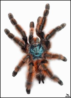 You knew @TopDogImaging was an ace at photographing dogs. But check out this tarantula photo he made! #lkld #photography #spiders