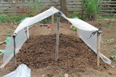 Making simple green house project for seedling