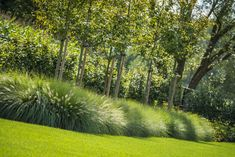 Lawn and Garden Tools Basics Pastorijwoning Tuinaanleg Gert Kwanten Love Garden, Dream Garden, Modern Garden Design, Landscape Design, Terrace Design, Garden Gates, Garden Tools, Ornamental Grasses, Plantation