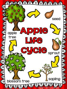 Life cycle of an apple!
