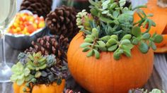 Fall decorating season has started! Here are 7 DIY ideas to try