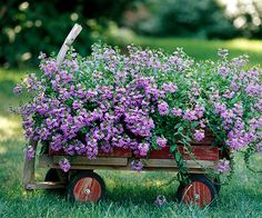 I kind of like the idea of planting in a wagon. That way I could move the flowers to wherever the party is!