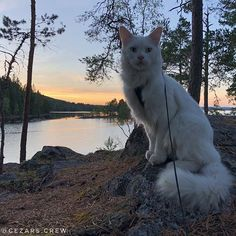 We had to push the bike deep into the forest for in order to find a wind shelter only to find out its was occupied by 4 Germans Adventure Cat, Shelter, How To Find Out, German, Camping, Bike, Deep, Cats, Travelling