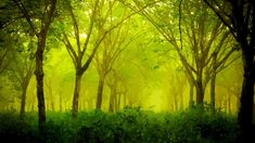 Forest Painting, Nature Hd, Wallpaper Size, Vector Art, Forest Drawing