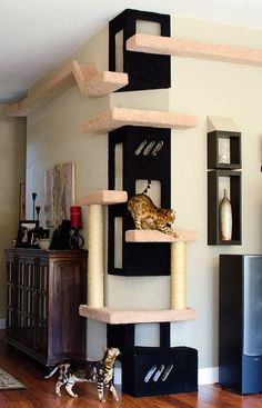 This climbing structure leads to two catwalks. The whole assembly is known as Ki… This climbing structure leads to two catwalks. The whole assembly is known as Kitty City. Photo by Marjorie Darrow and Ryan Davis Cat Towers, Cat Playground, Playground Design, Playground Ideas, Cat Room, Cat Condo, Pet Furniture, Furniture Ideas, Furniture Removal