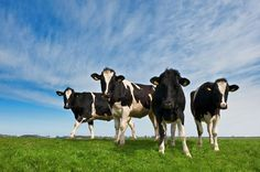 11 milioane de euro pentru micii producători de lapte