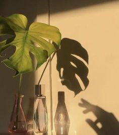 Plant Aesthetic, Aesthetic Photo, Aesthetic Pictures, Photocollage, Aesthetic Bedroom, Wall Collage, Aesthetic Wallpapers, Planting Flowers, Painting