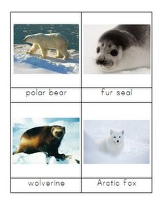 This was meant to be our first January unit, but lack of routine and school was getting to us so we went ahead and started a week early.First we looked for the Arctic Circle on our globe and talked… Artic Animals, Water Animals, Winter Fun, Winter Theme, Polo Norte, Animal Habitats, Animal Cards, Polar Bear, Animal Pictures