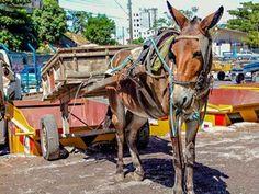 Buena noticia: Prohibieron la circulación de carros y carrozas con tracción a sangre por calles y avenidas de Vitória | Seamos Más Animales... Como Ellos