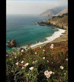California coastline on Hwy 1, with pink bindweed in the foreground.