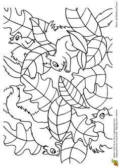 * Cache Cache Feuilles Ecureuils, page 6 sur 16 sur HugoLescargot.com Preschool Coloring Pages, Coloring Book Art, Doodle Coloring, Animal Coloring Pages, Colouring Pages, Coloring Pages For Kids, Fall Preschool Activities, Preschool Crafts, Autumn Crafts