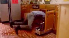 ハムブログ: 今日見たゴミ映画。 『ゴースト・シャーク』です。恐ろしいですね。