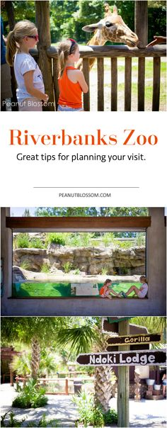 Heading to Columbia, SC? Be sure to make a stop at the Riverbanks Zoo--a family friendly weekend adventure. My kids love this place! Great tips for making your visit run smoothly in the heat of summer.