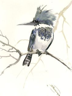 Belted Kingfisher, 15 x 12 in, original watercolor painting, kingfisher art, bird, birds bird lover, bird watching bird art, gray brown by ORIGINALONLY on Etsy