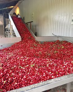 This incredible Ontario cranberry farm is the perfect fall day trip