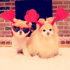 Look who is all ready for Valentines Day! it's BOO!