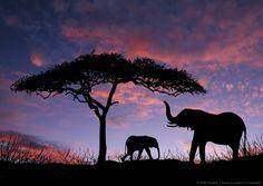 Elephants standing under tree at sunrise on the Massai Mara in Kenya Africa